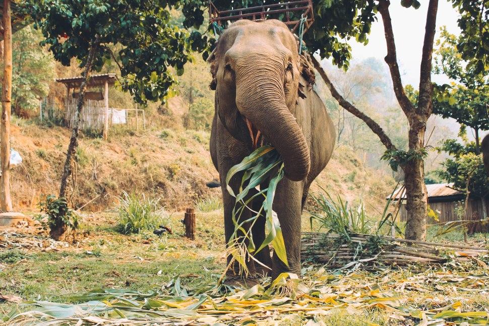 Thailand-Carlotadeandres-9354