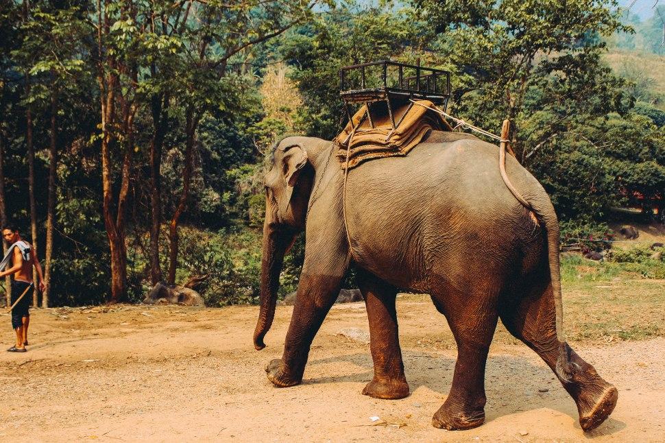 Thailand-Carlotadeandres-9419-1